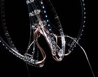 Ctenophora
