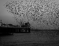 Brighton in Black and White