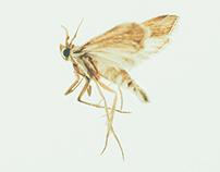 Lamp Shade Bugs