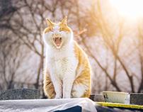 小区的流浪猫(一)