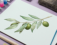 Watercolor Illustration. Vector. Olive branch