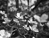 Black & White Film Photography