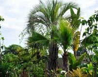 Bloom Garden Amazonica