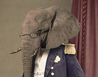 Elegant Elephant II (Cornelius)