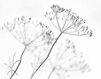 Lilliput #pt.2 [from white to black]