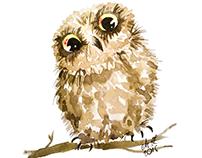 My owls (2)