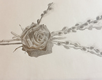 Rose and Pussywillow Sketch