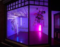 Orchidaceae Oncidium @ Galleryeight
