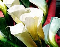 Hommage Tamara de Lempicka
