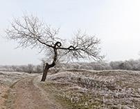Winter in Haarlem