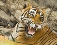 Wildlife_Ranthambore
