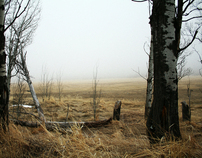 Lumberfell