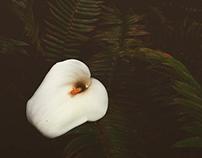 Flowers Pt. IV