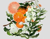 Illustration Design of Fruit Spray