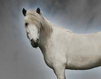 Staðarhús Icelandic Horse Farm