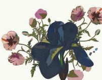 The Flower/ P.1