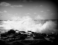Sea life 13