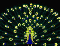 Magic peacock