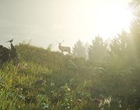 Landscape/ Forest glade