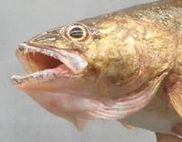 Realistic Animatronic Walleye Fish replica Puppet
