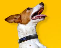 Nike+ Dogs