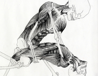 Hand Drawn Anatomical Sketches