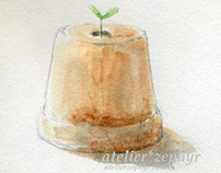 Plant's sprout