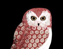 The secret world of owl migration