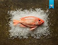 Fresh Food Market FFM (Display)