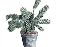 Aquarela Botânica | Revista Casa e Jardim