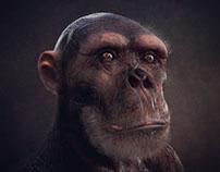 Primate Creature Study - Chimpanzee