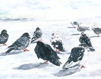 pigeon in Sochi