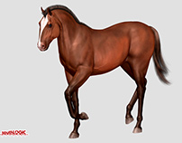 Horse 3D modeling for video games