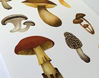 Illustrations - Botanical