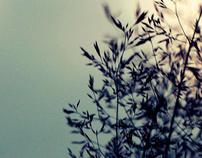 stille skønhed