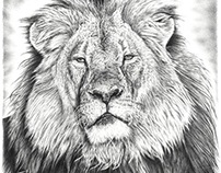 Cecil the Lion Pencil Drawing