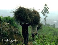 Rail Hike - Pattipola - Nanu Oya