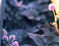 Rail Hike | Flower