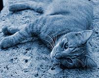 Cyanotype Photography [pt.21]