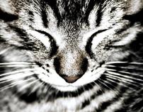 Cat photograps