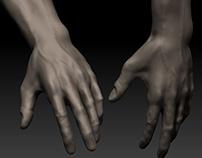 Anatomy Studies / 3D