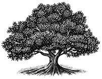 The Tree Illustration Collection by Steven Noble