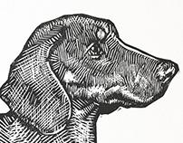 Print of Dachshund