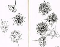 Botânica, diário gráfico (Botanical sketchbook )