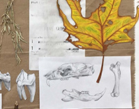 Natural Object Studies