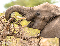 African Impact - Greater Kruger - March 2016
