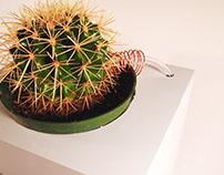 Home Cactus Tap