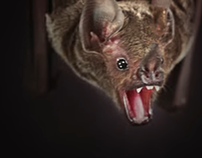 Journeying With Bats - National Geographic