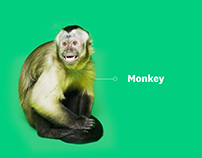 SurveyMonkey: Where the Curious Come to Grow