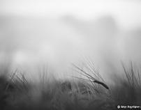 Secret ilfe of the wheat